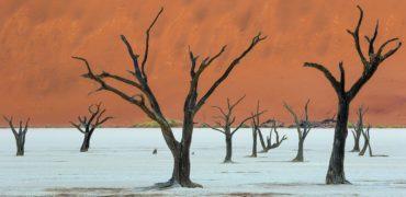 Fotowyprawa do Namibii - ewaipiotr.pl, dead vlei, martwy las